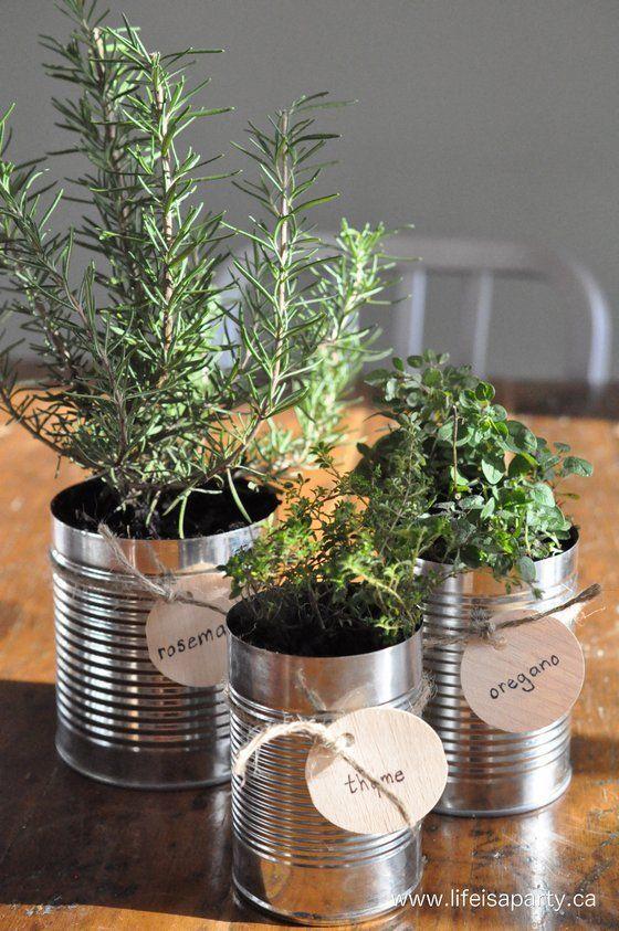 temperos plantados em latas recicladas em uma horta dentro de casa