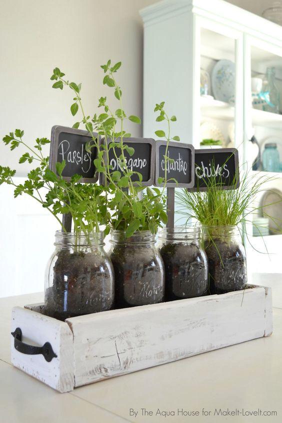 temperos plantados em vidros