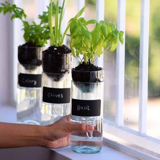 garrafas pet na janela com temperos plantados para horta em casa