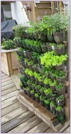 horta vertical feitas de garrafa de plastico
