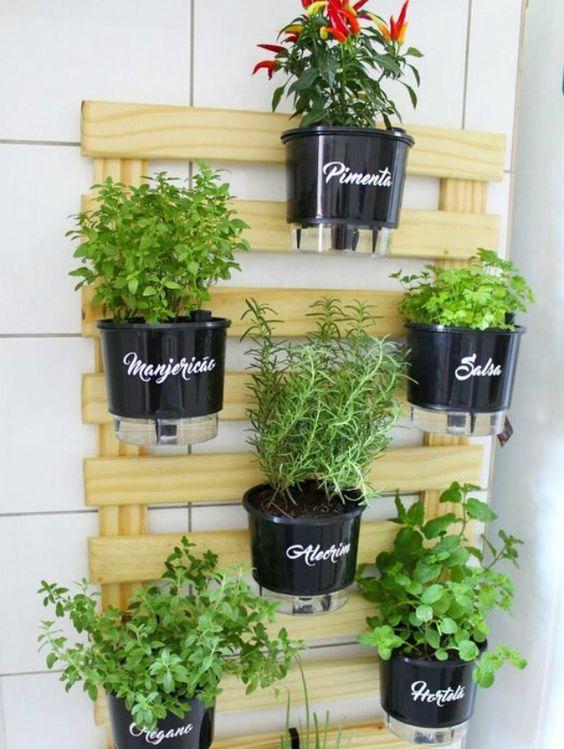 temperos plantado e presos em palate de madeira